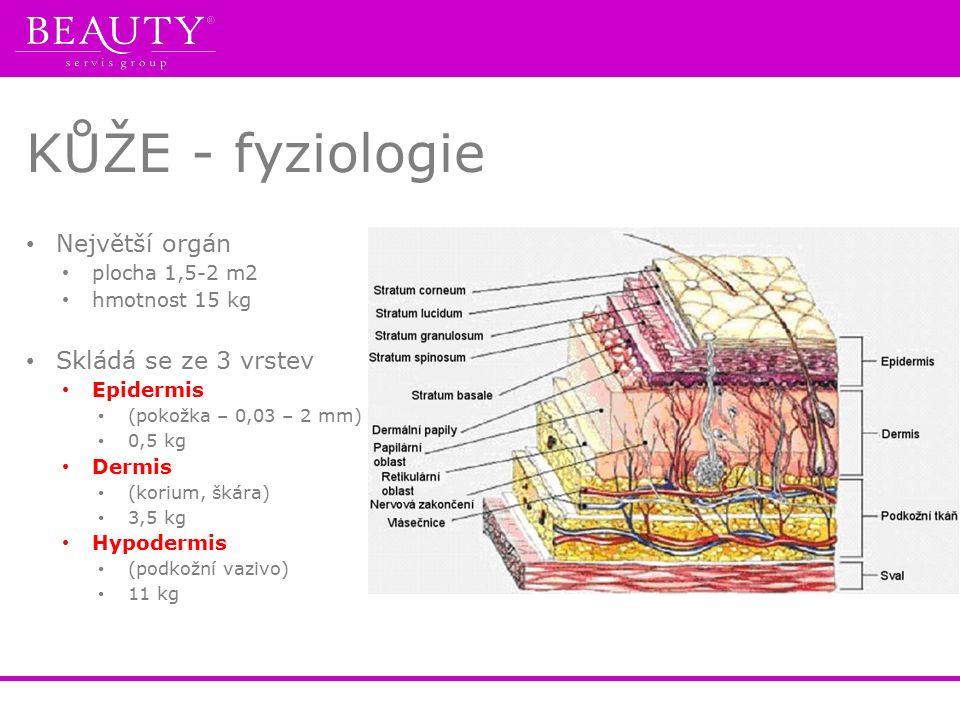 KŮŽE - fyziologie Největší orgán plocha 1,5-2 m2 hmotnost 15 kg Skládá se ze 3 vrstev Epidermis (pokožka – 0,03 – 2 mm) 0,5 kg Dermis (korium, škára) 3,5 kg Hypodermis (podkožní vazivo) 11 kg