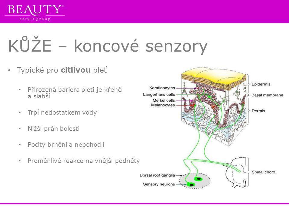 KŮŽE – koncové senzory Typické pro citlivou pleť Přirozená bariéra pleti je křehčí a slabší Trpí nedostatkem vody Nižší práh bolesti Pocity brnění a n
