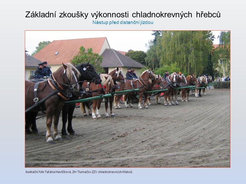 Základní zkoušky výkonnosti chladnokrevných hřebců Nástup před distanční jízdou Ilustrační foto Taťána Havlíčková, ZH Tlumačov ZZV chladnokrevných hřebců.