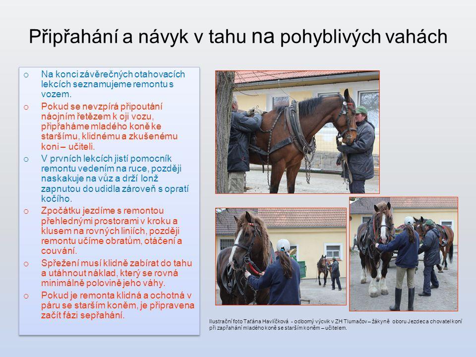 Připřahání a návyk v tahu na pohyblivých vahách Ilustrační foto Taťána Havlíčková - odborný výcvik v ZH Tlumačov – žákyně oboru Jezdec a chovatel koní při zapřahání mladého koně se starším koněm – učitelem.