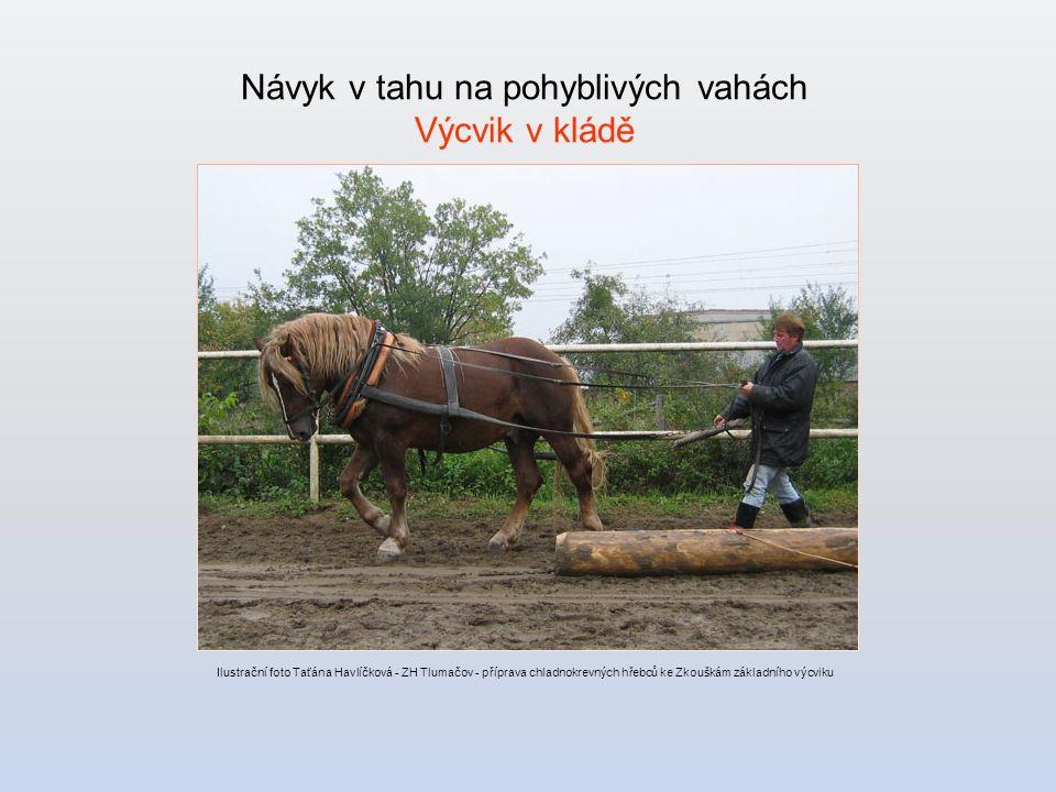 Návyk v tahu na pohyblivých vahách Výcvik v kládě Ilustrační foto Taťána Havlíčková - ZH Tlumačov - příprava chladnokrevných hřebců ke Zkouškám základního výcviku
