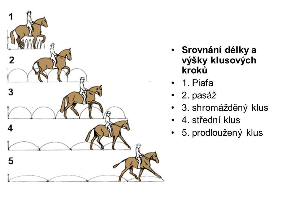 Srovnání délky a výšky klusových kroků 1. Piafa 2. pasáž 3. shromážděný klus 4. střední klus 5. prodloužený klus