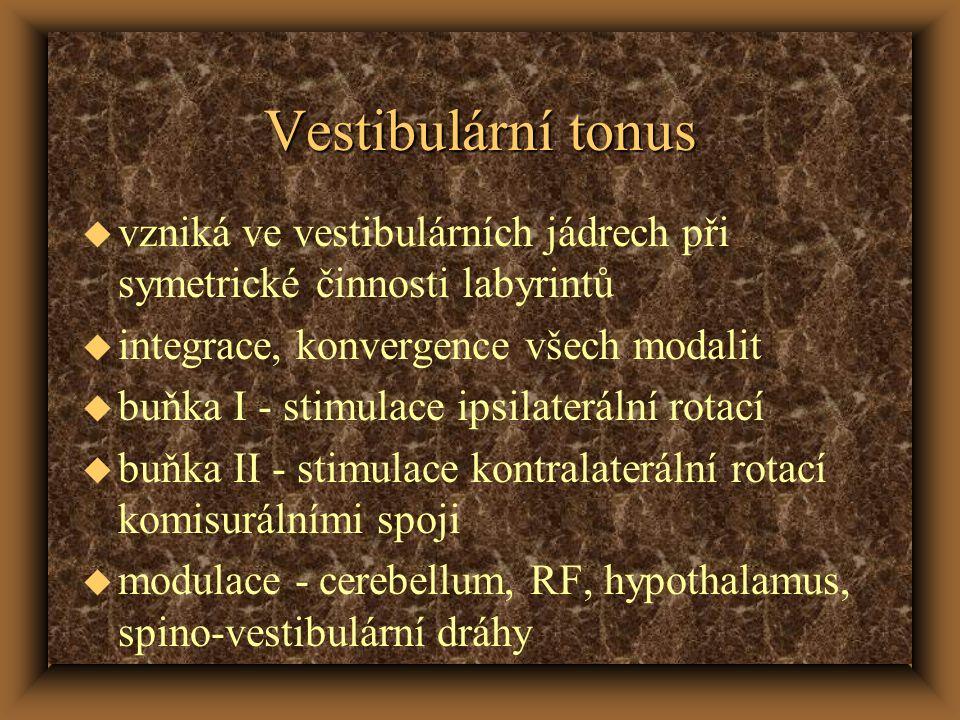 Vestibulární tonus u vzniká ve vestibulárních jádrech při symetrické činnosti labyrintů u integrace, konvergence všech modalit u buňka I - stimulace ipsilaterální rotací u buňka II - stimulace kontralaterální rotací komisurálními spoji u modulace - cerebellum, RF, hypothalamus, spino-vestibulární dráhy