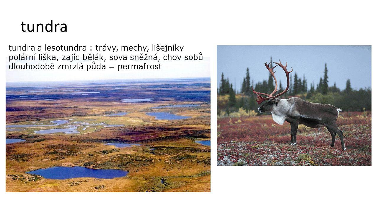 tundra tundra a lesotundra : trávy, mechy, lišejníky polární liška, zajíc bělák, sova sněžná, chov sobů dlouhodobě zmrzlá půda = permafrost