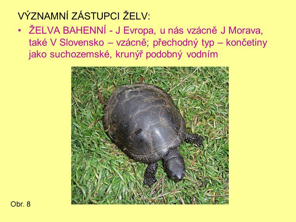 VÝZNAMNÍ ZÁSTUPCI ŽELV: ŽELVA BAHENNÍ - J Evropa, u nás vzácně J Morava, také V Slovensko – vzácně; přechodný typ – končetiny jako suchozemské, krunýř podobný vodním Obr.