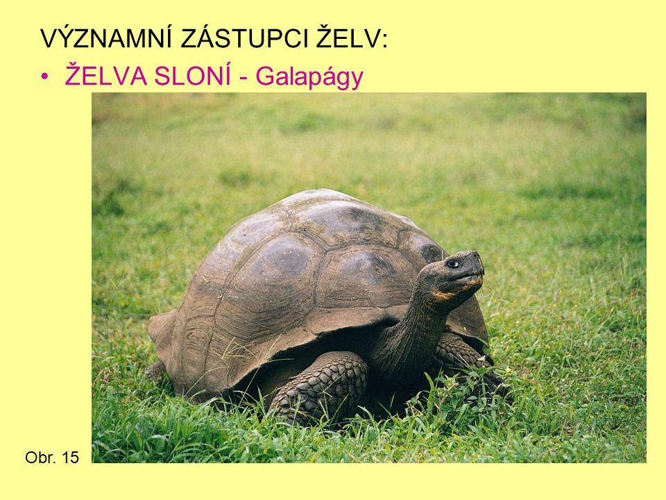 VÝZNAMNÍ ZÁSTUPCI ŽELV: ŽELVA SLONÍ - Galapágy Obr. 15