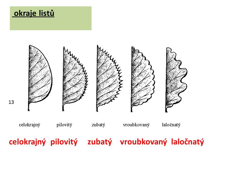 okraje listů celokrajný pilovitý zubatý vroubkovaný laločnatý 13