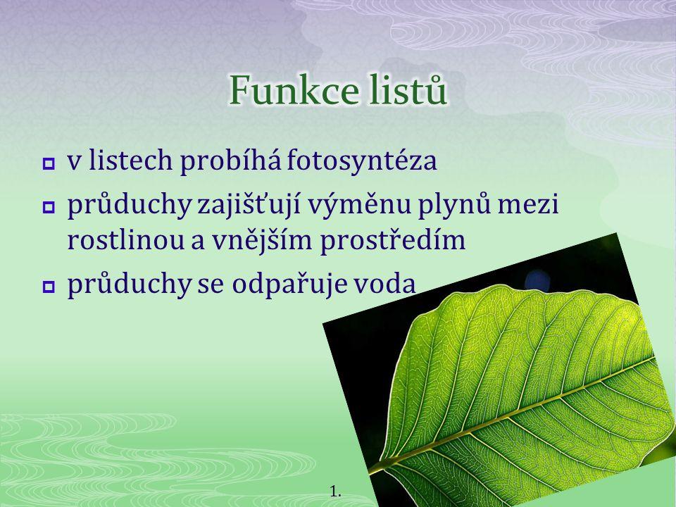  v listech probíhá fotosyntéza  průduchy zajišťují výměnu plynů mezi rostlinou a vnějším prostředím  průduchy se odpařuje voda 1.