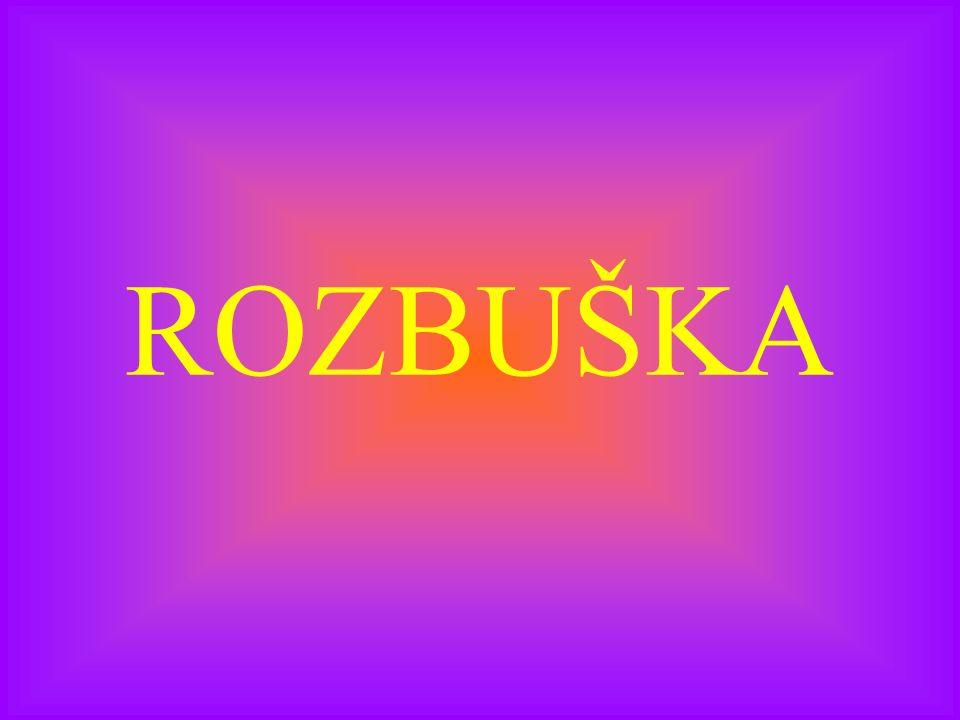 ROZBUŠKA