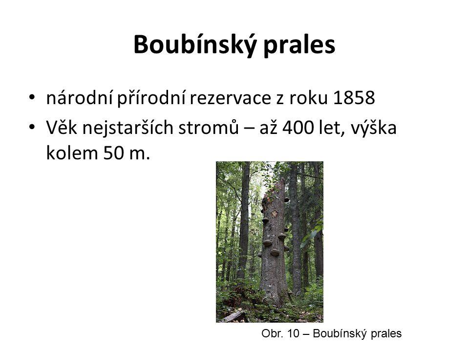 Boubínský prales národní přírodní rezervace z roku 1858 Věk nejstarších stromů – až 400 let, výška kolem 50 m.