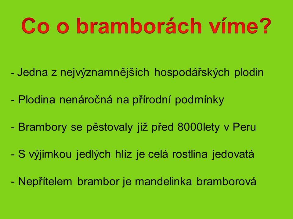 Lilek brambor Nebo také : Brambor obecný Brambor hlíznatý Brambora