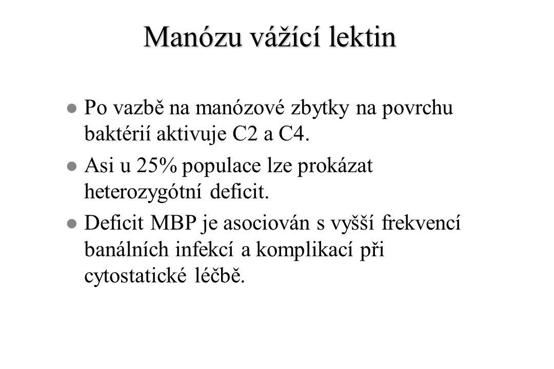 Manózu vážící lektin l Po vazbě na manózové zbytky na povrchu baktérií aktivuje C2 a C4. l Asi u 25% populace lze prokázat heterozygótní deficit. l De