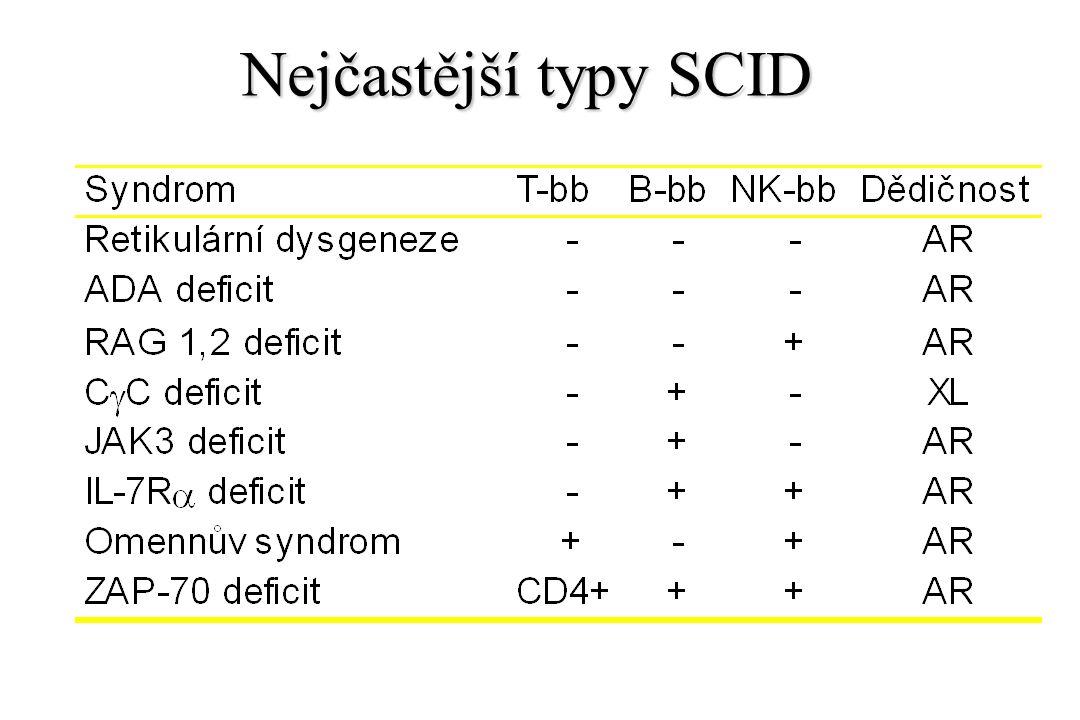 Nejčastější typy SCID