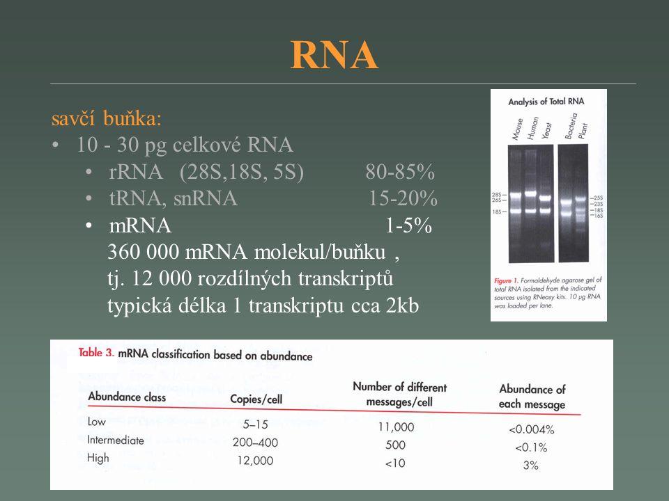 RNA savčí buňka: 10 - 30 pg celkové RNA rRNA (28S,18S, 5S) 80-85% tRNA, snRNA 15-20% mRNA 1-5% 360 000 mRNA molekul/buňku, tj.