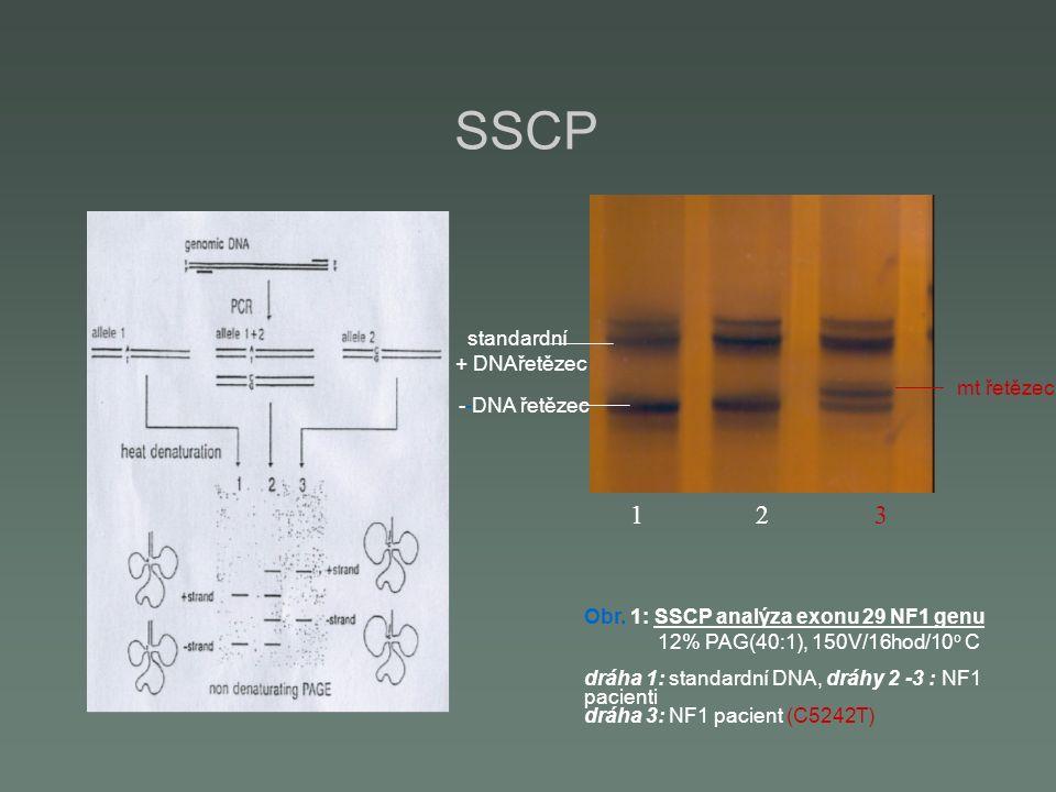 SSCP mt řetězec standardní + DNAřetězec --DNA řetězec 1 2 3 Obr. 1: SSCP analýza exonu 29 NF1 genu 12% PAG(40:1), 150V/16hod/10 o C dráha 1: standardn