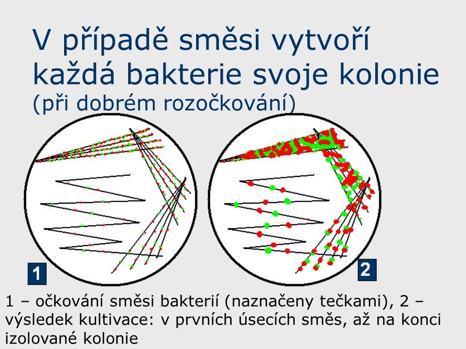 V případě směsi vytvoří každá bakterie svoje kolonie (při dobrém rozočkování) 1 – očkování směsi bakterií (naznačeny tečkami), 2 – výsledek kultivace: v prvních úsecích směs, až na konci izolované kolonie