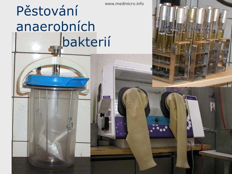 Pěstování anaerobních bakterií www.medmicro.info