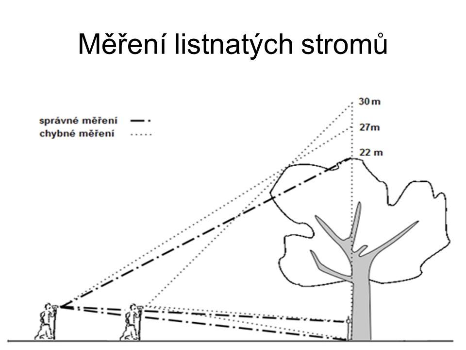 Měření listnatých stromů