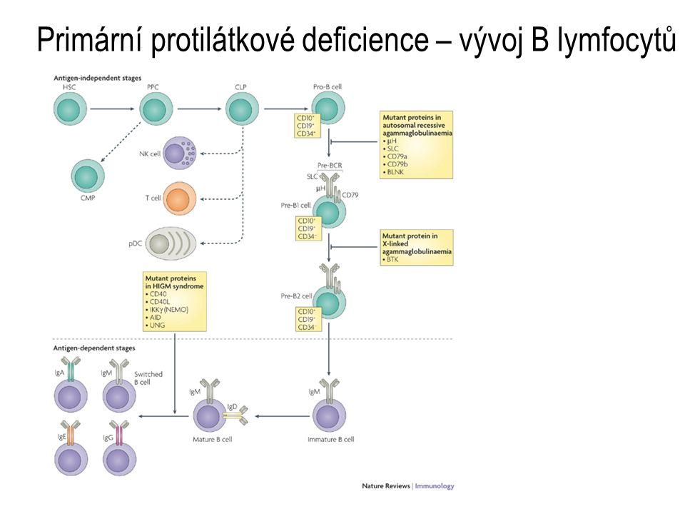 Primární protilátkové deficience – vývoj B lymfocytů