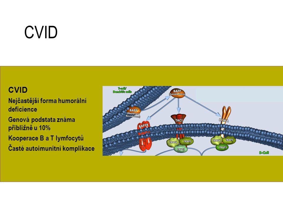CVID Nejčastější forma humorální deficience Genová podstata známa přibližně u 10% Kooperace B a T lymfocytů Časté autoimunitní komplikace CVID