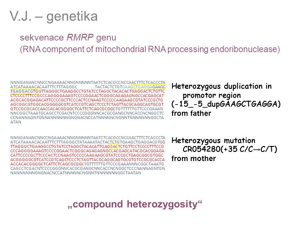 sekvenace RMRP genu (RNA component of mitochondrial RNA processing endoribonuclease) V.J. – genetika Heterozygous duplication in promotor region (-15_