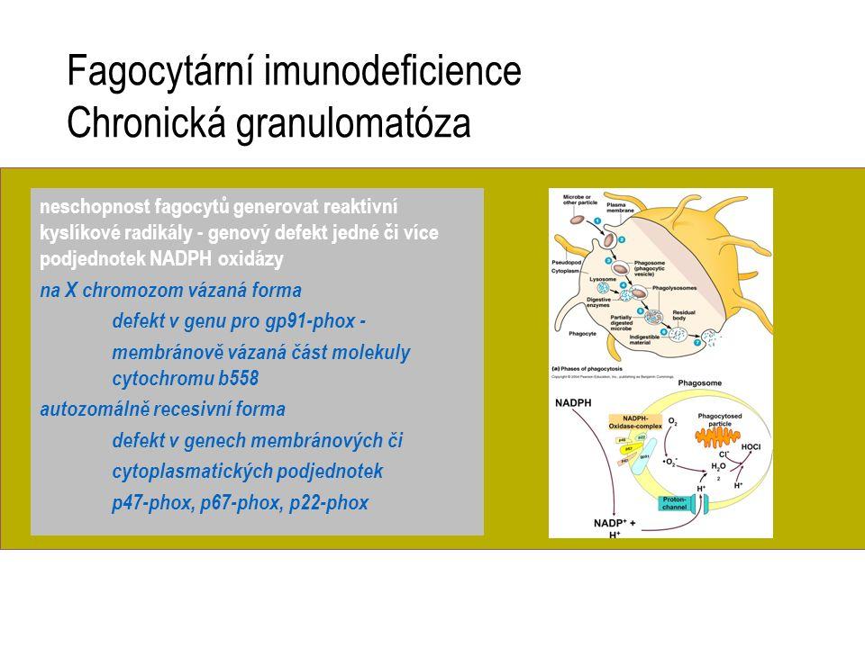 Fagocytární imunodeficience Chronická granulomatóza neschopnost fagocytů generovat reaktivní kyslíkové radikály - genový defekt jedné či více podjedno
