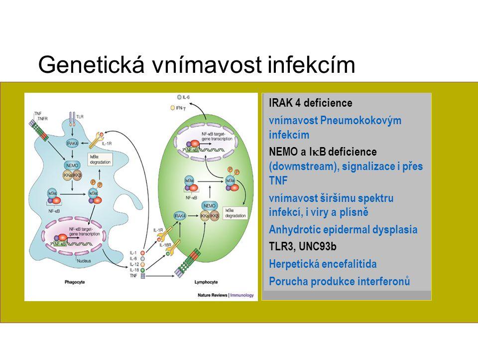 Nové imunodeficience Genetická vnímavost infekcím IRAK 4 deficience vnímavost Pneumokokovým infekcím NEMO a I  B deficience (dowmstream), signalizace