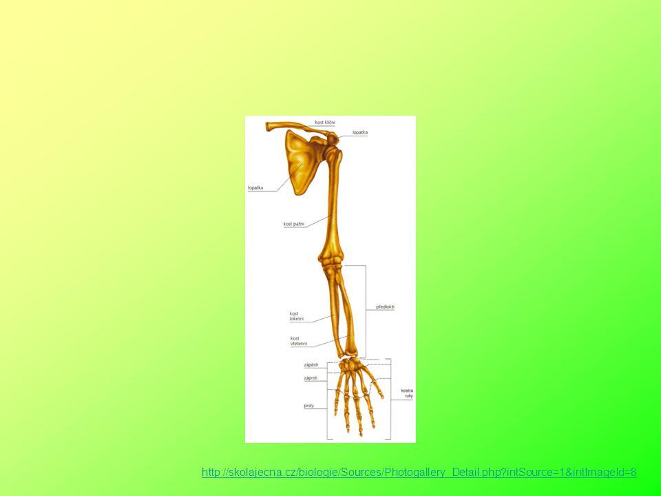 HK Spojen s osovou kostrou pletencem (lopatka a klíční kost) Uč. 27/22, 28 tabulka