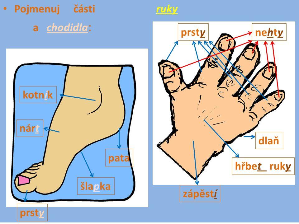 Pojmenuj části ruky a chodidla : zápěstí hřbet ruky prsty nehty dlaň kotník nárt pata šlapka prsty