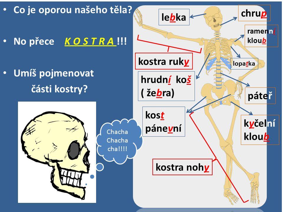 Co je oporou našeho těla? No přece K O S T R A !!! Umíš pojmenovat části kostry? lebka páteř hrudní koš ( žebra) ramenní kloub kost pánevní kyčelní kl