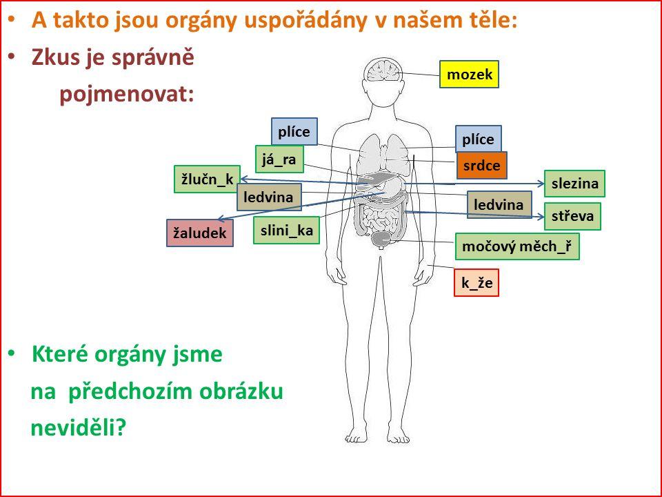 A takto jsou orgány uspořádány v našem těle: Zkus je správně pojmenovat: Které orgány jsme na předchozím obrázku neviděli? mozek plíce srdce já_ra sle