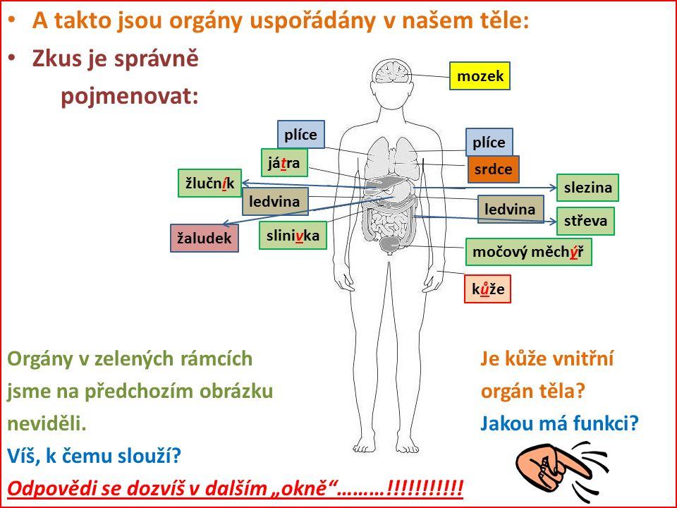 A takto jsou orgány uspořádány v našem těle: Zkus je správně pojmenovat: Orgány v zelených rámcích Je kůže vnitřní jsme na předchozím obrázku orgán těla.