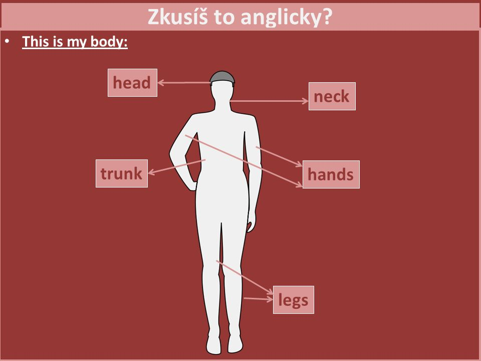 Zkusíš to anglicky This is my body: head neck hands trunk legs