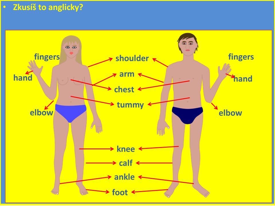 Zkusíš to anglicky shoulder chest tummy knee calf ankle foot arm elbow hand fingers