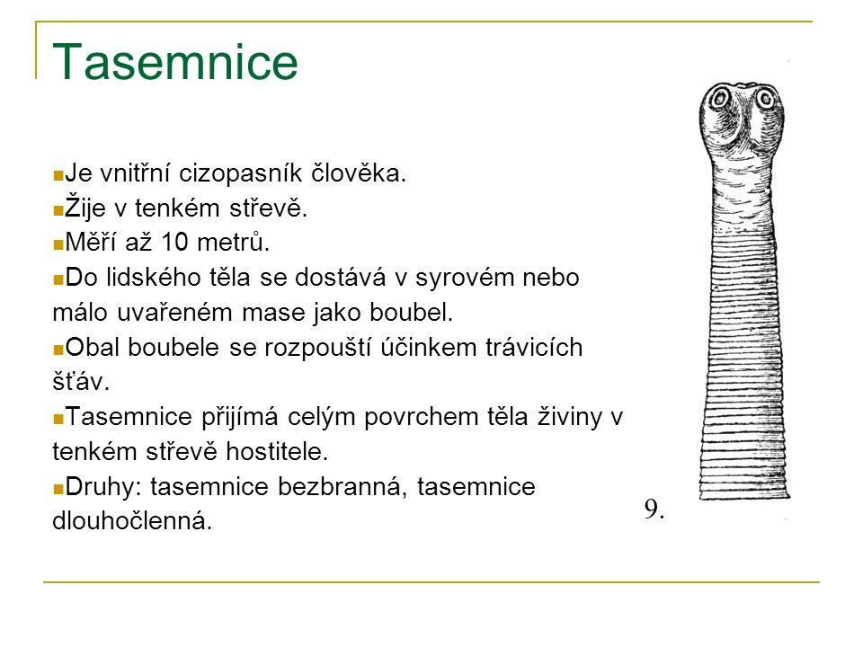 Tasemnice Je vnitřní cizopasník člověka. Žije v tenkém střevě. Měří až 10 metrů. Do lidského těla se dostává v syrovém nebo málo uvařeném mase jako bo