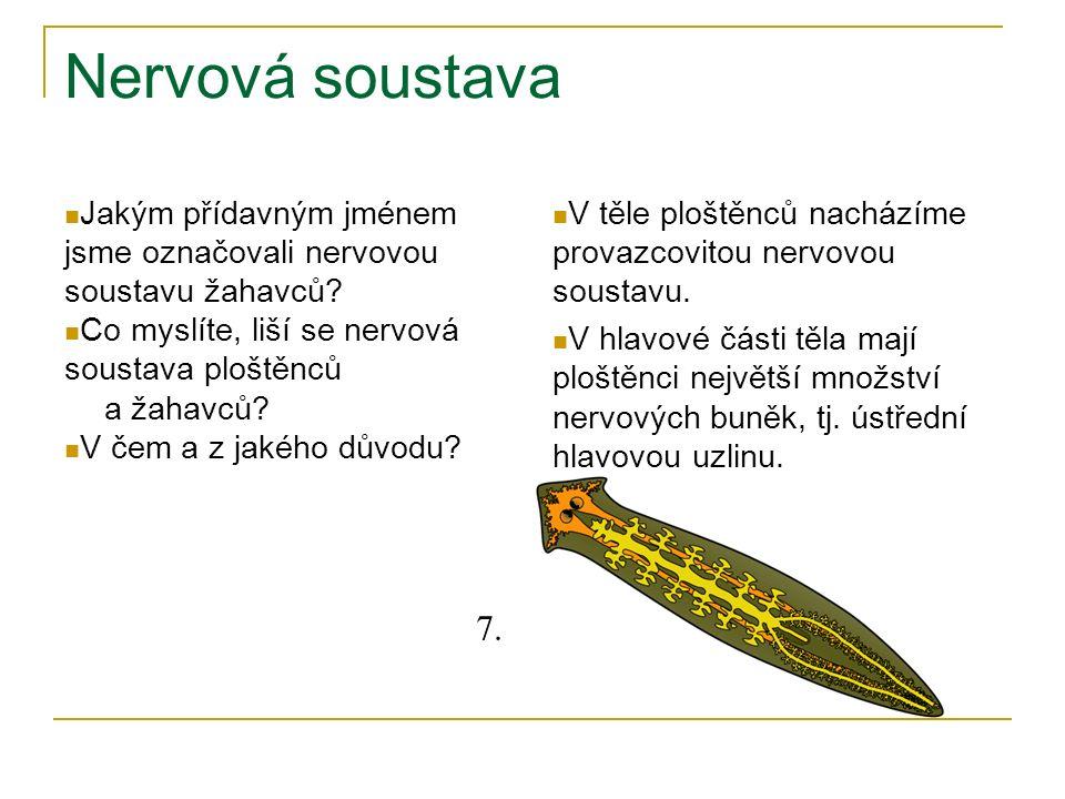 Nervová soustava Jakým přídavným jménem jsme označovali nervovou soustavu žahavců? Co myslíte, liší se nervová soustava ploštěnců a žahavců? V čem a z