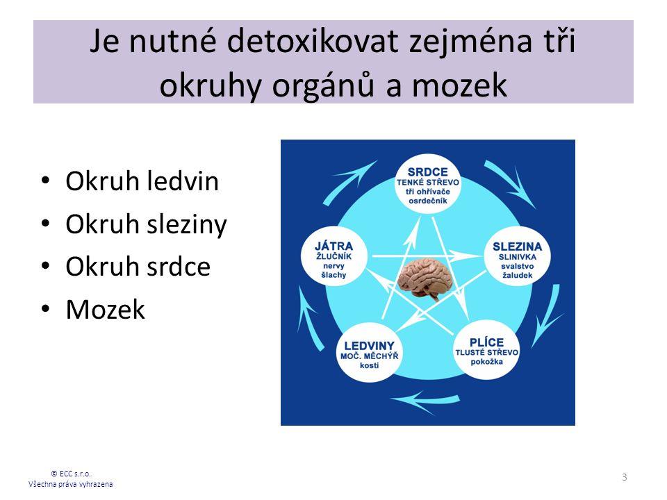 Je nutné detoxikovat zejména tři okruhy orgánů a mozek Okruh ledvin Okruh sleziny Okruh srdce Mozek © ECC s.r.o.
