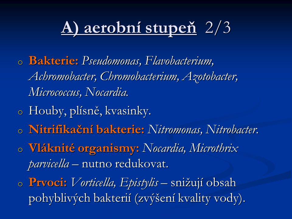 A) aerobní stupeň 2/3 o Bakterie: Pseudomonas, Flavobacterium, Achromobacter, Chromobacterium, Azotobacter, Micrococcus, Nocardia.