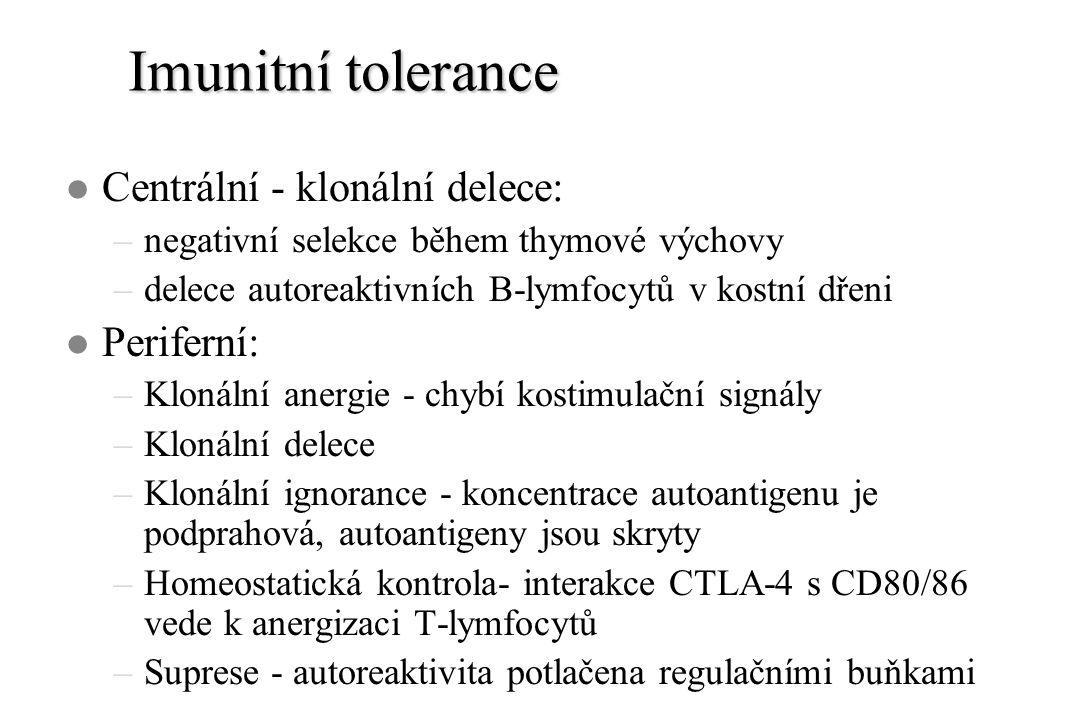 Imunitní tolerance l Centrální - klonální delece: –negativní selekce během thymové výchovy –delece autoreaktivních B-lymfocytů v kostní dřeni l Periferní: –Klonální anergie - chybí kostimulační signály –Klonální delece –Klonální ignorance - koncentrace autoantigenu je podprahová, autoantigeny jsou skryty –Homeostatická kontrola- interakce CTLA-4 s CD80/86 vede k anergizaci T-lymfocytů –Suprese - autoreaktivita potlačena regulačními buňkami