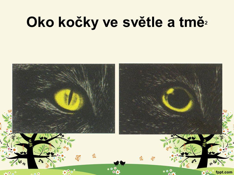 Oko kočky ve světle a tmě 2