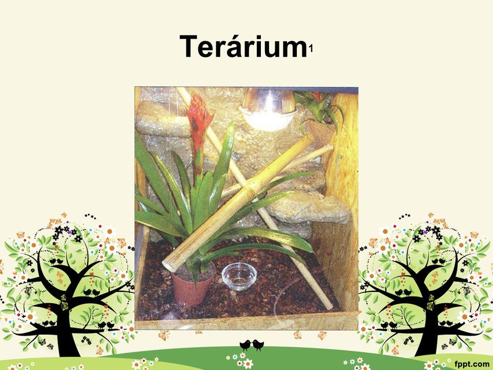 Terárium 1
