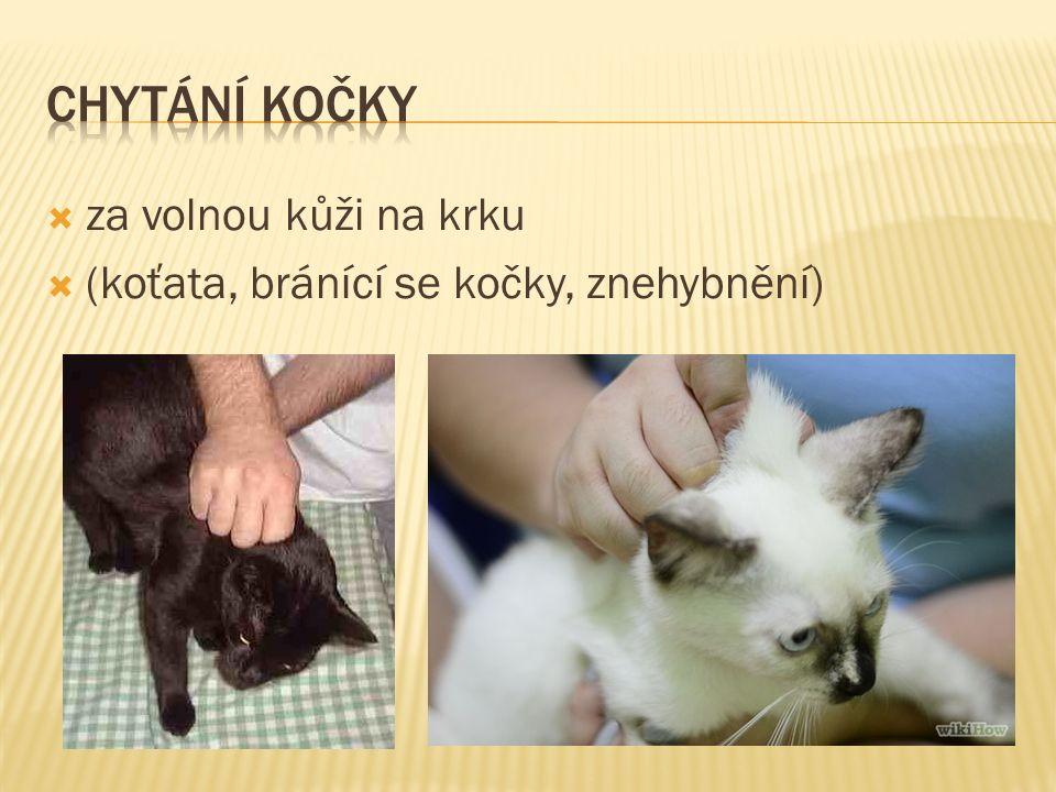  za volnou kůži na krku  (koťata, bránící se kočky, znehybnění)