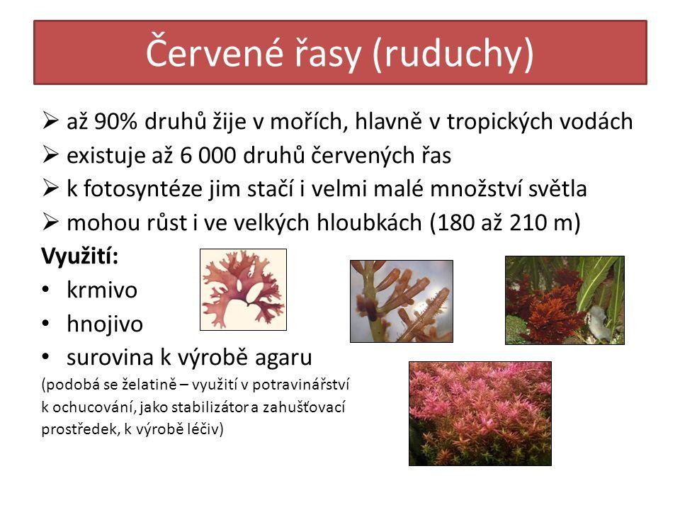Červené řasy (ruduchy)  až 90% druhů žije v mořích, hlavně v tropických vodách  existuje až 6 000 druhů červených řas  k fotosyntéze jim stačí i velmi malé množství světla  mohou růst i ve velkých hloubkách (180 až 210 m) Využití: krmivo hnojivo surovina k výrobě agaru (podobá se želatině – využití v potravinářství k ochucování, jako stabilizátor a zahušťovací prostředek, k výrobě léčiv)