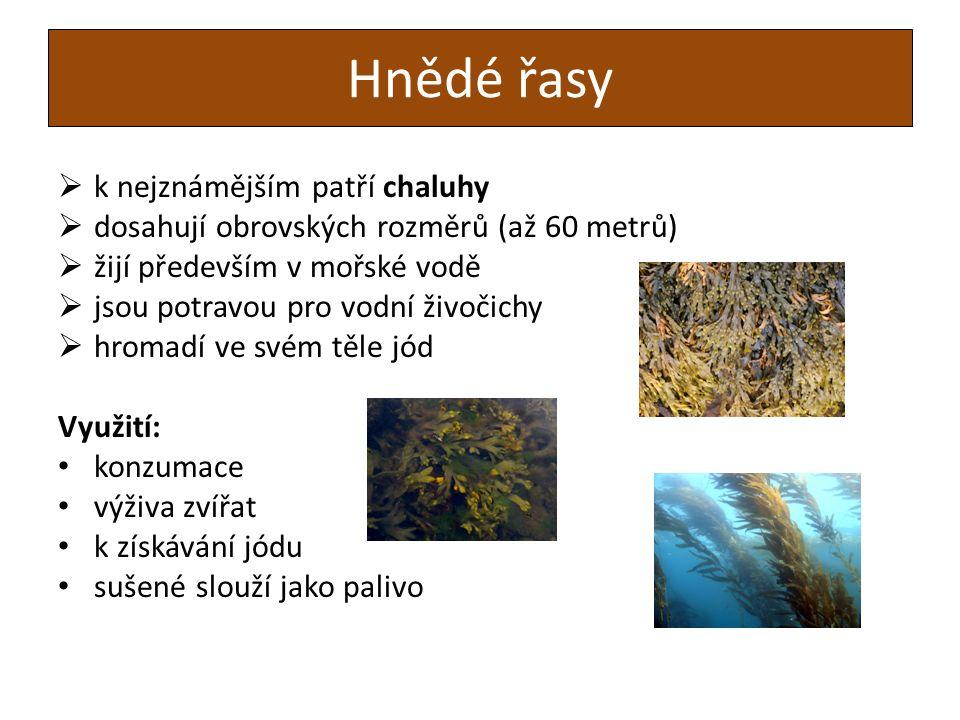 Hnědé řasy  k nejznámějším patří chaluhy  dosahují obrovských rozměrů (až 60 metrů)  žijí především v mořské vodě  jsou potravou pro vodní živočichy  hromadí ve svém těle jód Využití: konzumace výživa zvířat k získávání jódu sušené slouží jako palivo