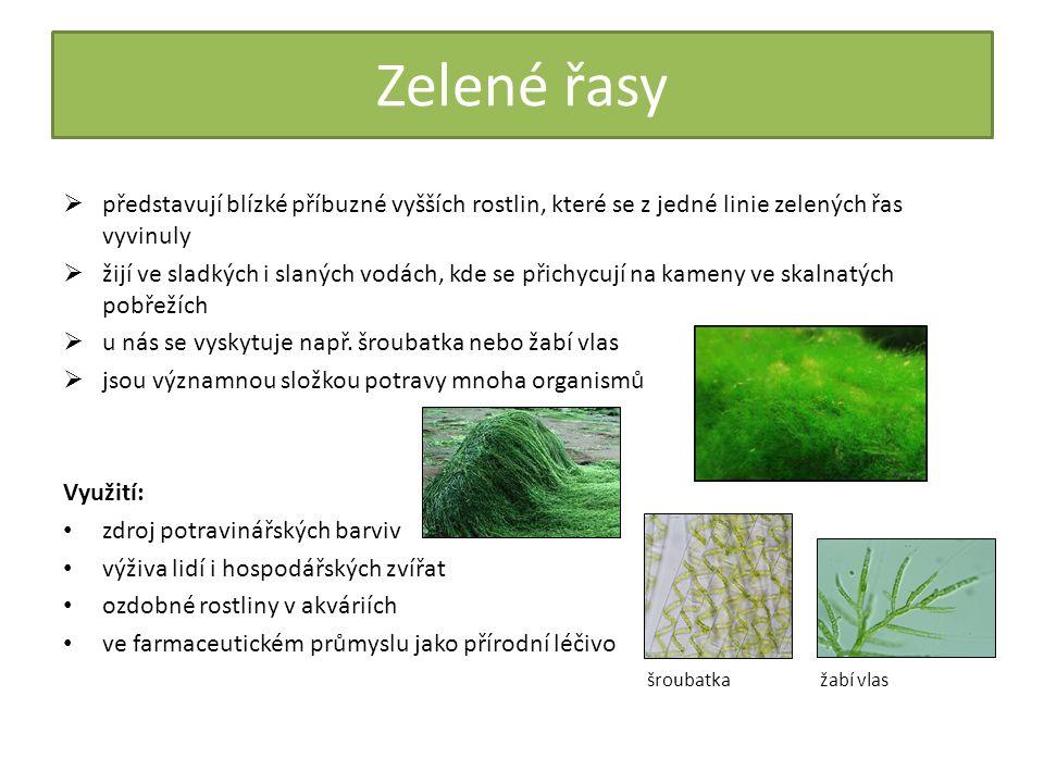 Opakování a shrnutí Čím se liší nižší a vyšší rostliny.