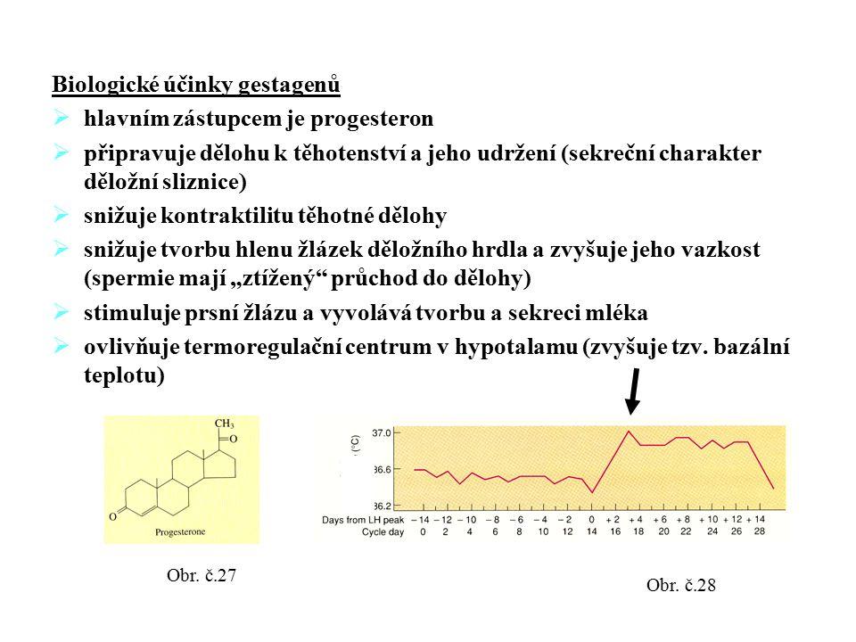 Biologické účinky gestagenů  hlavním zástupcem je progesteron  připravuje dělohu k těhotenství a jeho udržení (sekreční charakter děložní sliznice)