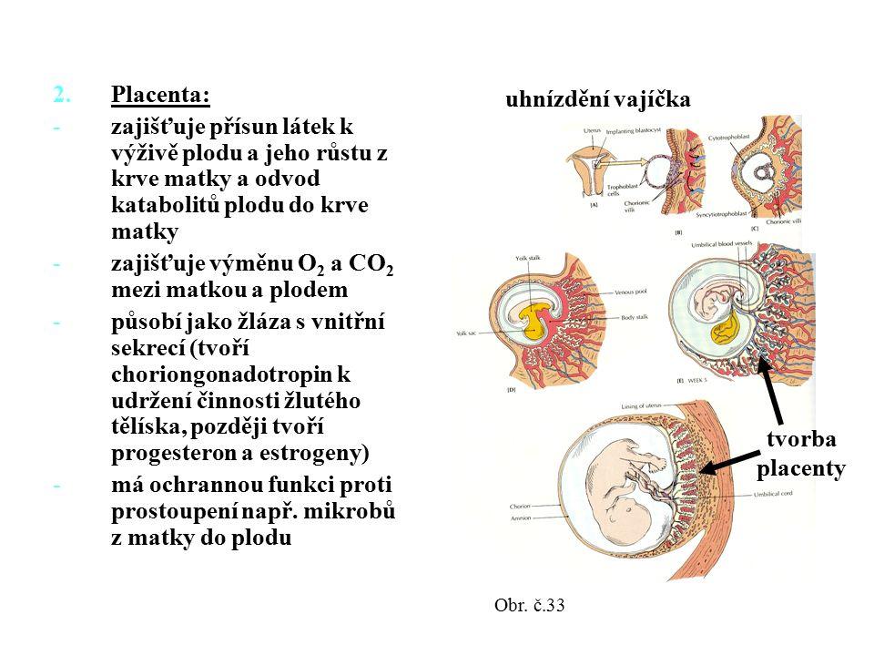 2.Placenta: -zajišťuje přísun látek k výživě plodu a jeho růstu z krve matky a odvod katabolitů plodu do krve matky -zajišťuje výměnu O 2 a CO 2 mezi matkou a plodem -působí jako žláza s vnitřní sekrecí (tvoří choriongonadotropin k udržení činnosti žlutého tělíska, později tvoří progesteron a estrogeny) -má ochrannou funkci proti prostoupení např.