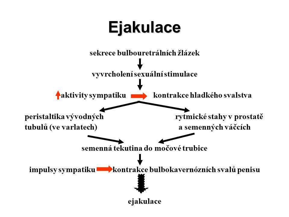 Ejakulace sekrece bulbouretrálních žlázek vyvrcholení sexuální stimulace aktivity sympatiku kontrakce hladkého svalstva peristaltika vývodných rytmické stahy v prostatě tubulů (ve varlatech) a semenných váčcích semenná tekutina do močové trubice impulsy sympatiku kontrakce bulbokavernózních svalů penisu ejakulace