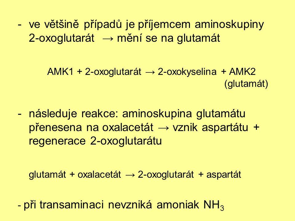 -ve většině případů je příjemcem aminoskupiny 2-oxoglutarát → mění se na glutamát AMK1 + 2-oxoglutarát → 2-oxokyselina + AMK2 (glutamát) -následuje reakce: aminoskupina glutamátu přenesena na oxalacetát → vznik aspartátu + regenerace 2-oxoglutarátu glutamát + oxalacetát → 2-oxoglutarát + aspartát - při transaminaci nevzniká amoniak NH 3