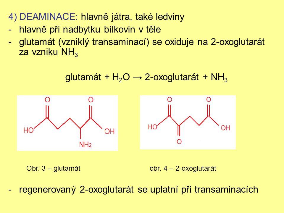 4) DEAMINACE: hlavně játra, také ledviny -hlavně při nadbytku bílkovin v těle -glutamát (vzniklý transaminací) se oxiduje na 2-oxoglutarát za vzniku NH 3 glutamát + H 2 O → 2-oxoglutarát + NH 3 -regenerovaný 2-oxoglutarát se uplatní při transaminacích Obr.